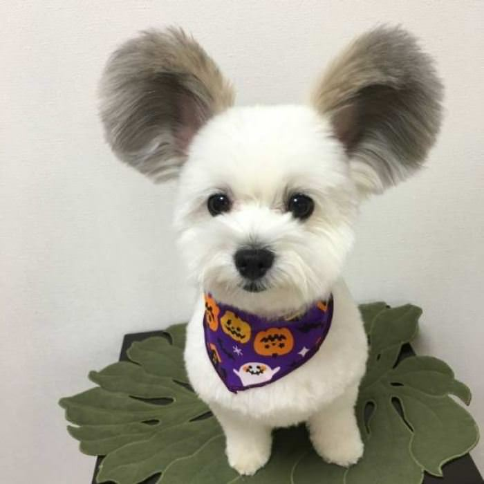 This Cute Fluffy Puppy