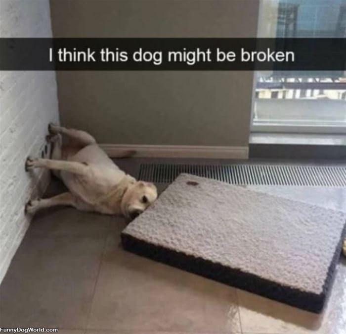 This Dog Is Broken