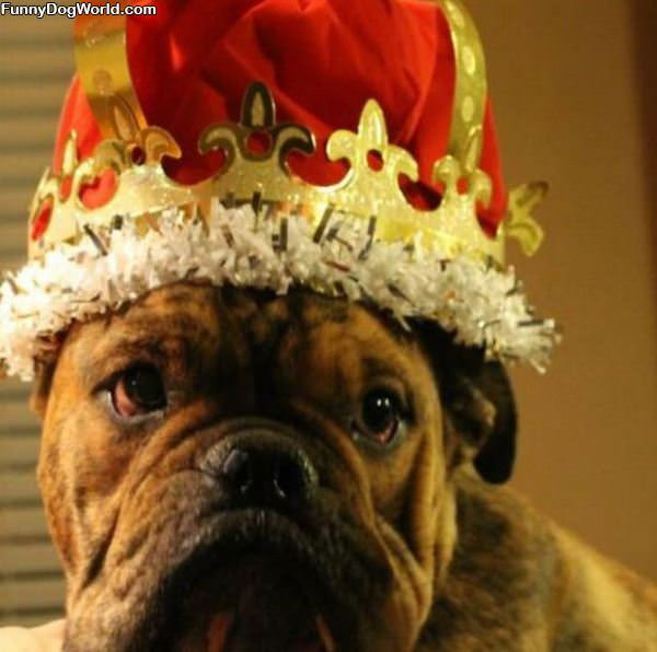 This Dog Is The King