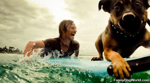 This Dog Loves Surfing