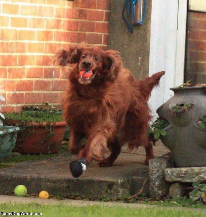 This Dog Really Loves Playing Fetch