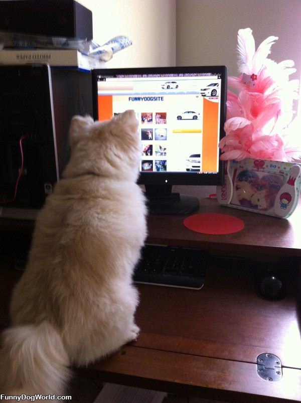 Thumper On Funnydogsite