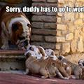 funny dog 5