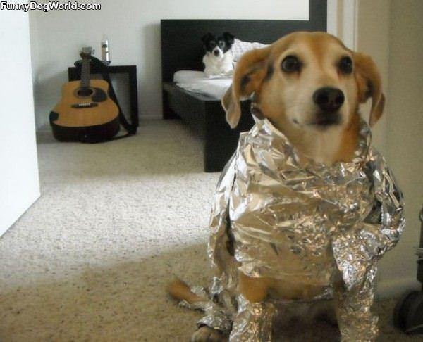Tin Foil Dog