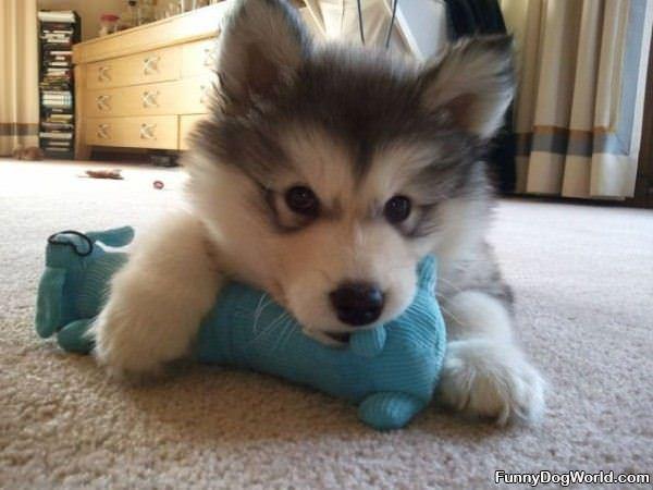 Tiny Puppy Toy