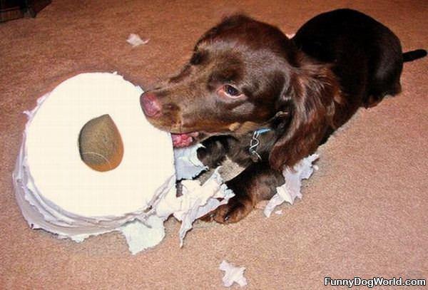 Toilet Paper Fetch