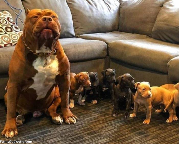 Tough Little Family