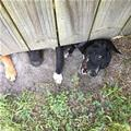 Under The Fence