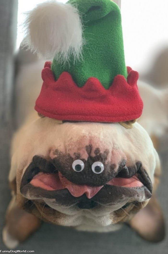 Upside Down Christmas Dog