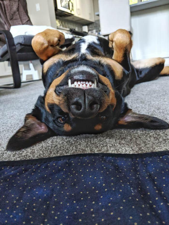 Upside Down Cute Dog