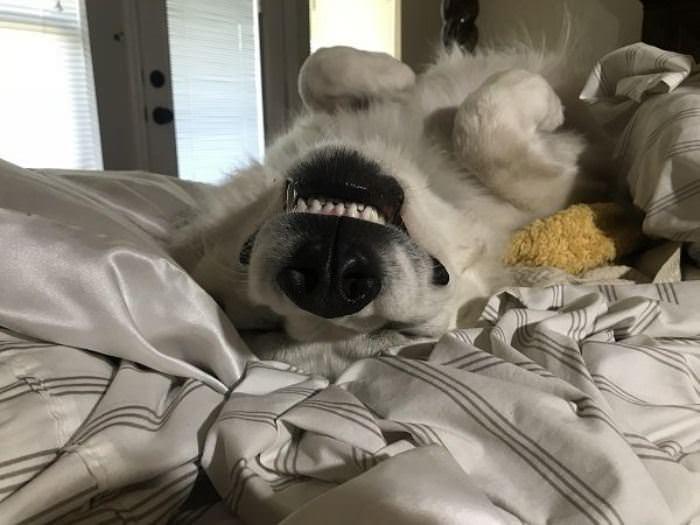 Upside Down Sleeper