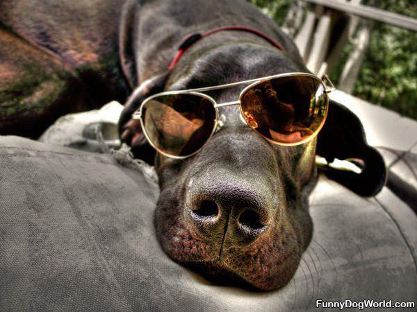 Very Cool Dog Glasses