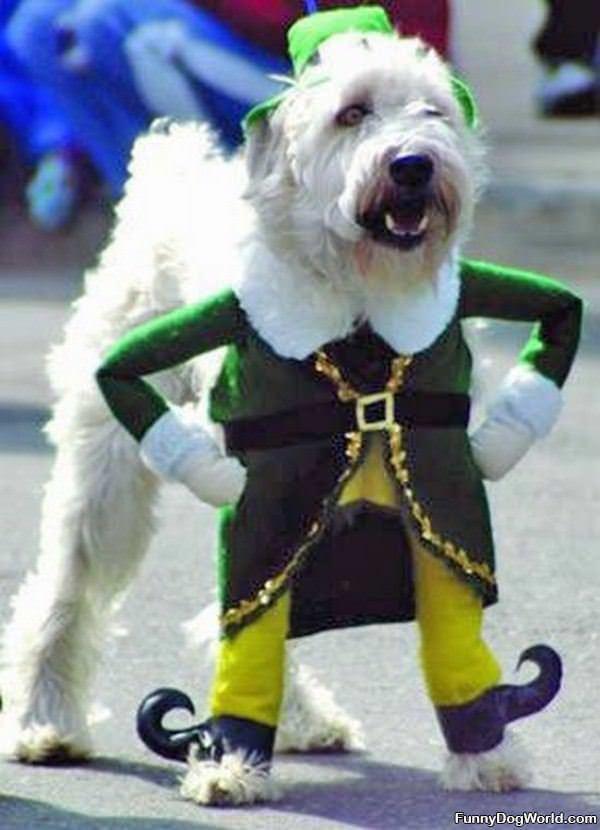 Very Irish Dog