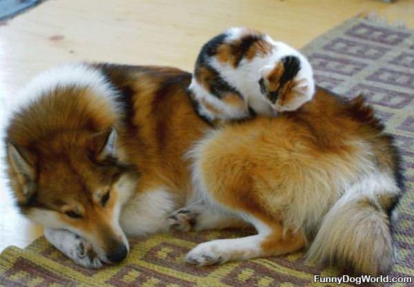 Warm Together
