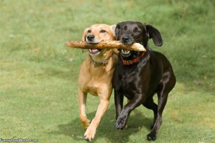 We Fetch Together