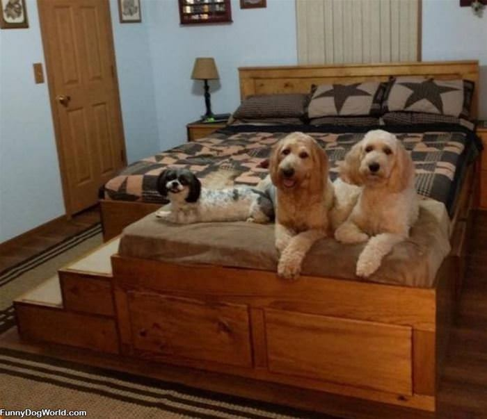 We Got This Fancy Bed