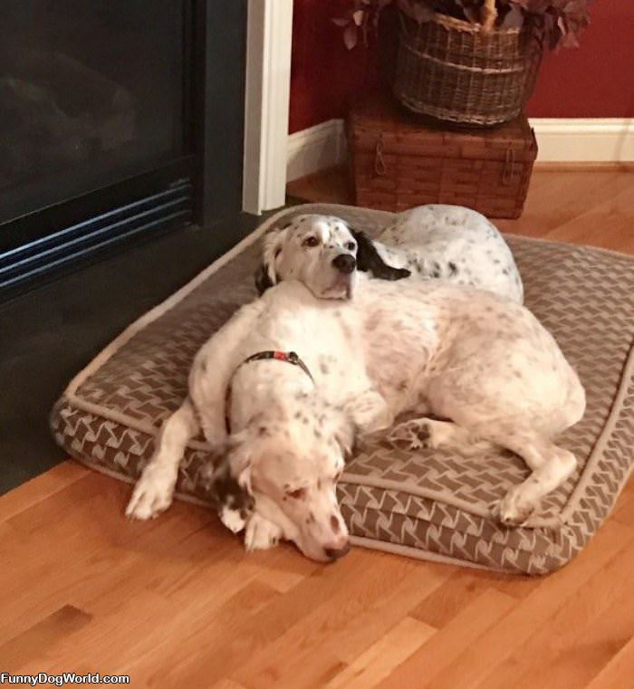 We Share This Bed