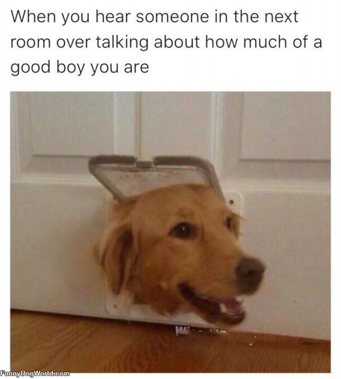 What A Good Boy You Are