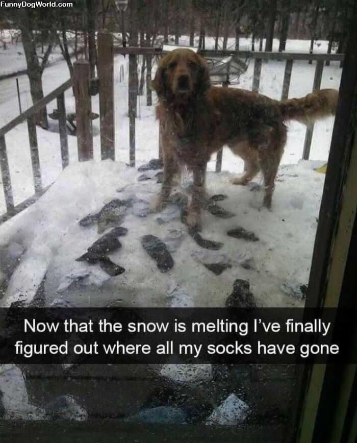 Where Did My Socks Go