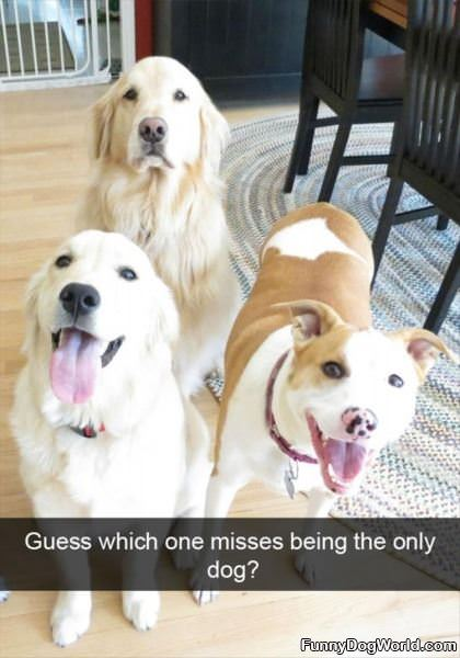 Which One Misses Being The Only