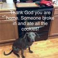 Who Ate The Cookies