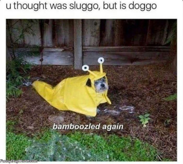 You Thought It Was Sluggo