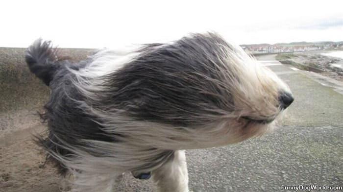 A Big Wind Day