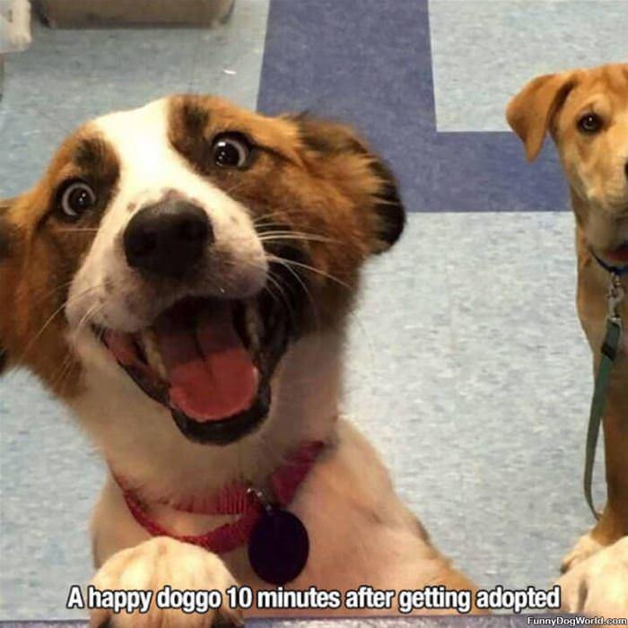 A Happy Doggo