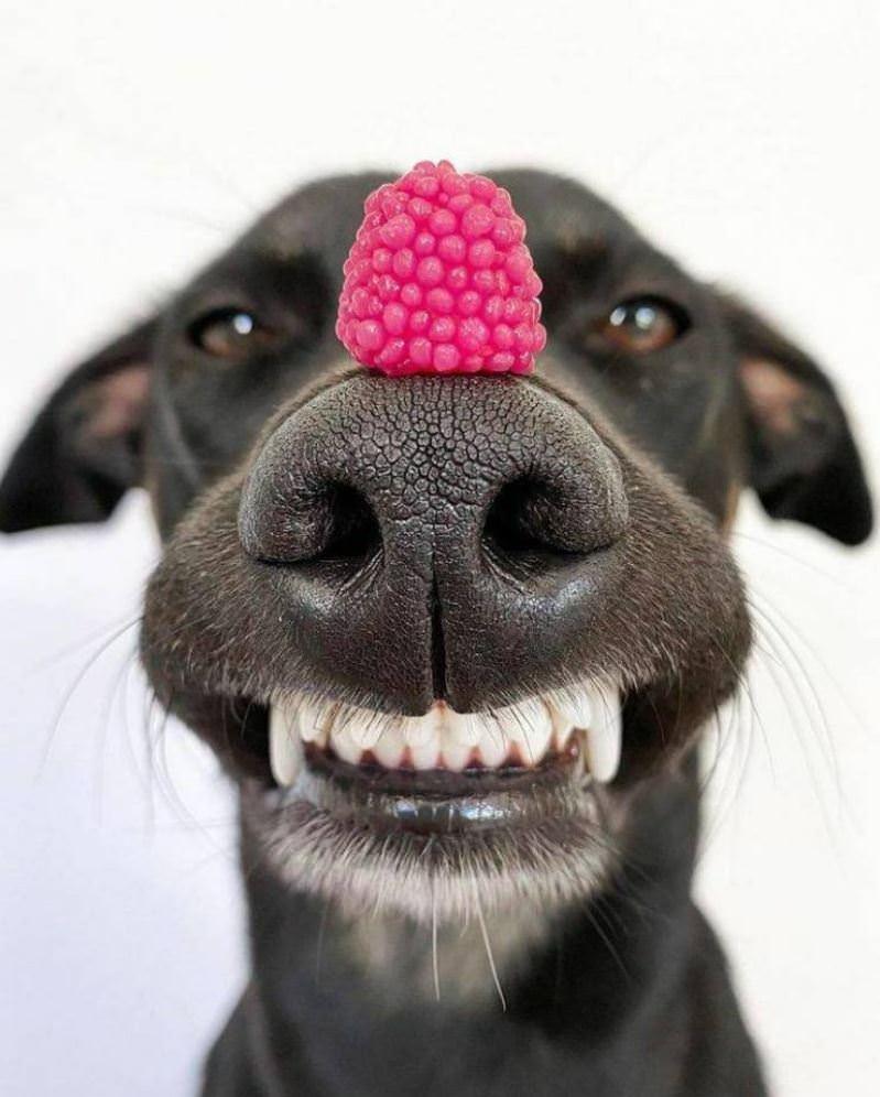 A Happy Pupper