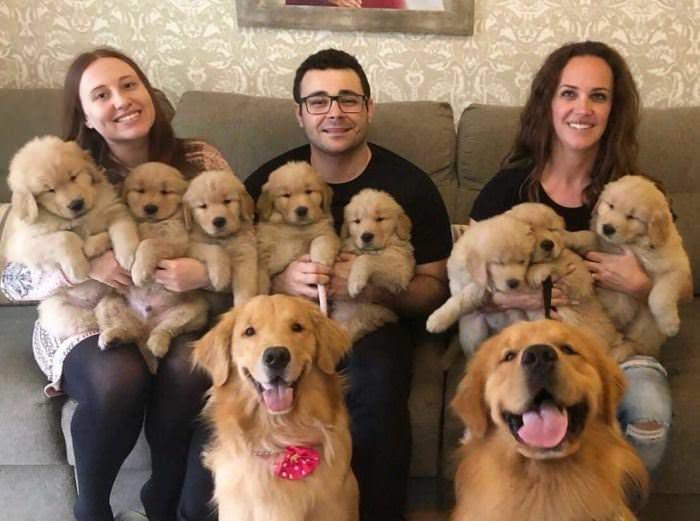 A Huge Dog Family