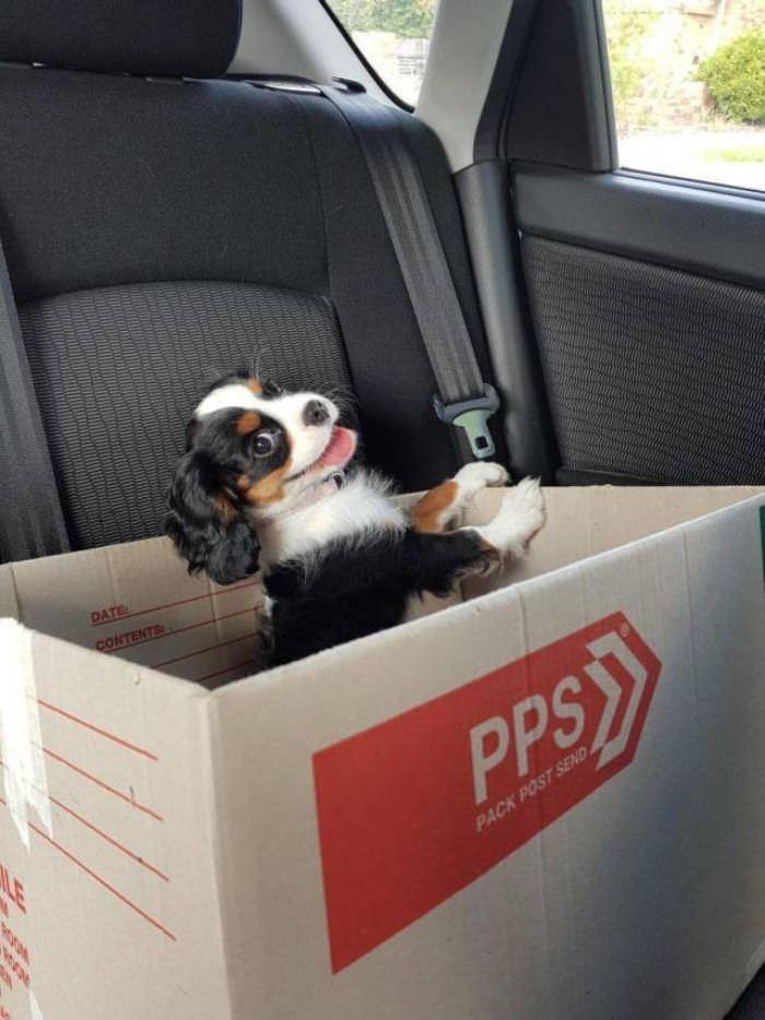 A Puppy In A Box