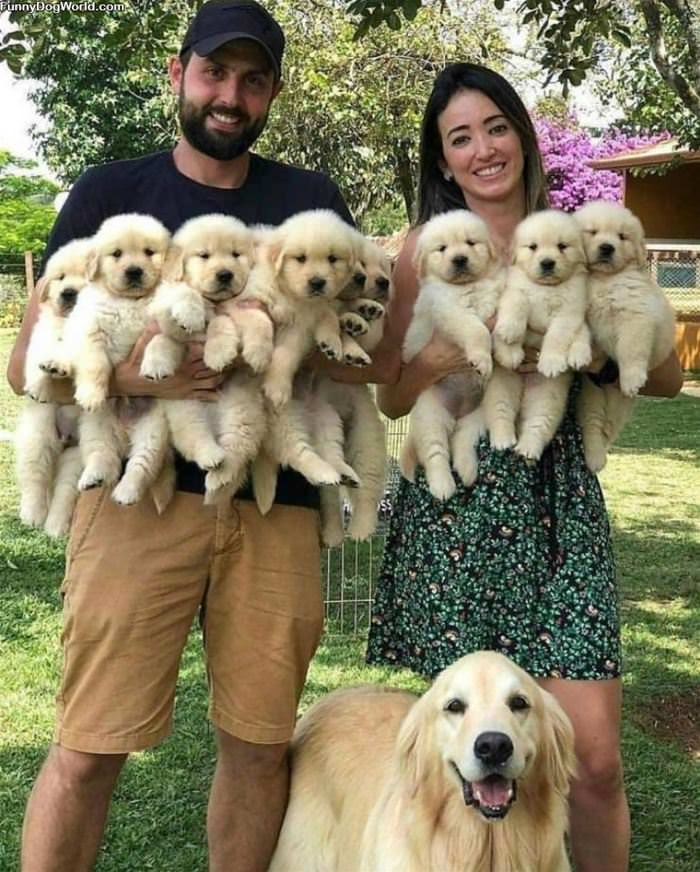 All These Puppers