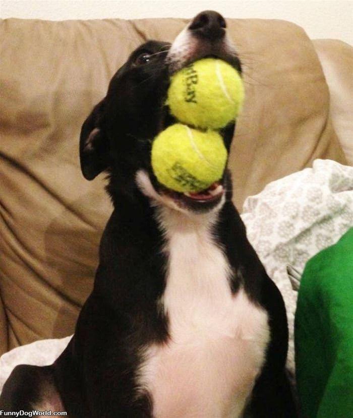 Alllll Of The Balls