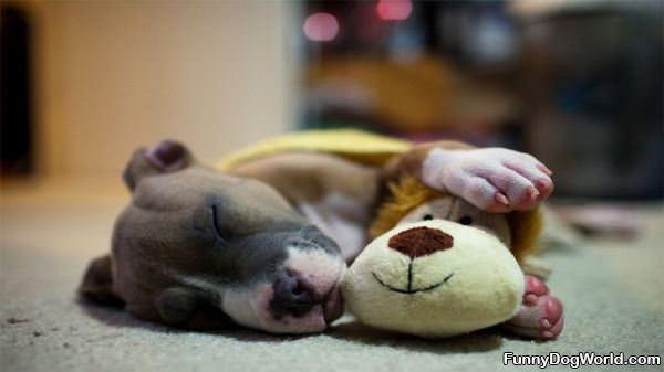 Asleep With My Bear
