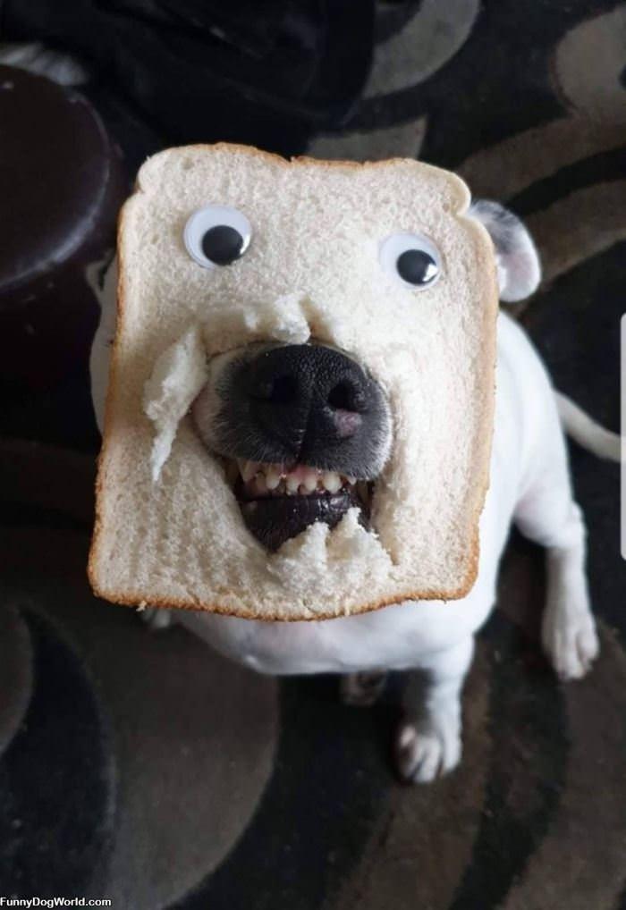 Bread Dog
