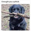 Brought You A Stick
