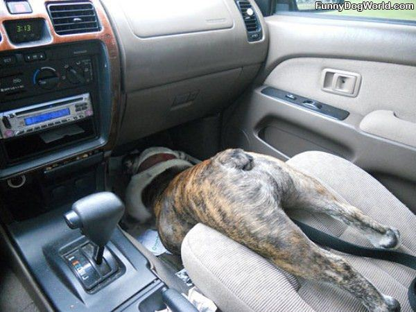 Car Rides
