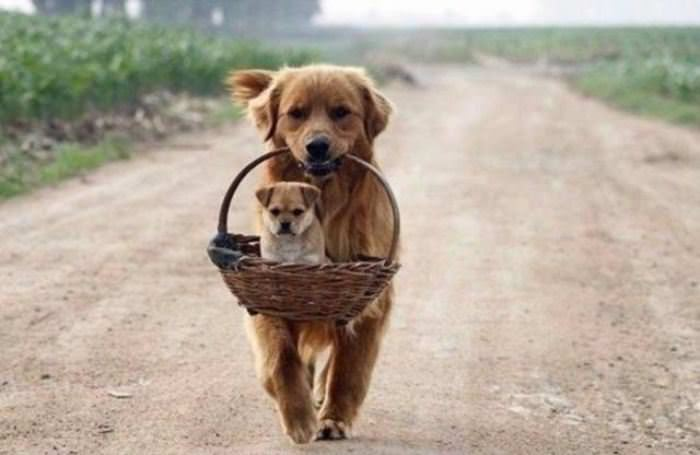 Carrying My Puppy