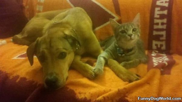 Cat And Dog Holding Hands