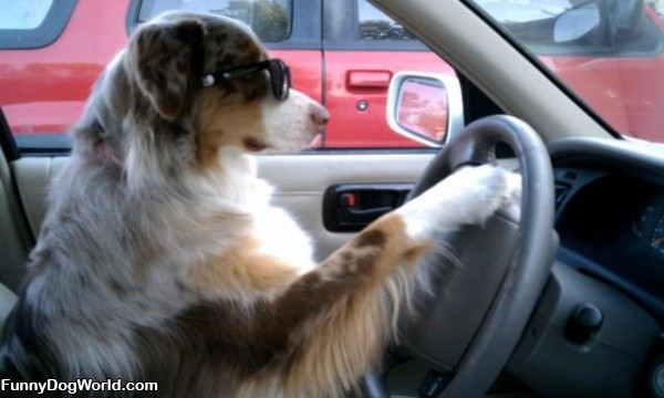 Colby Driving