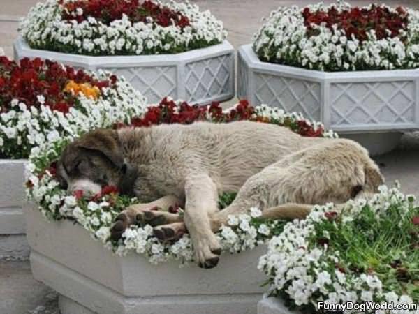 Comfy Flowers
