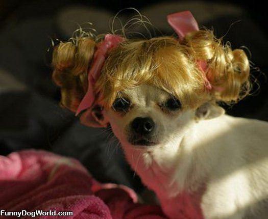 Cute Hair Dog