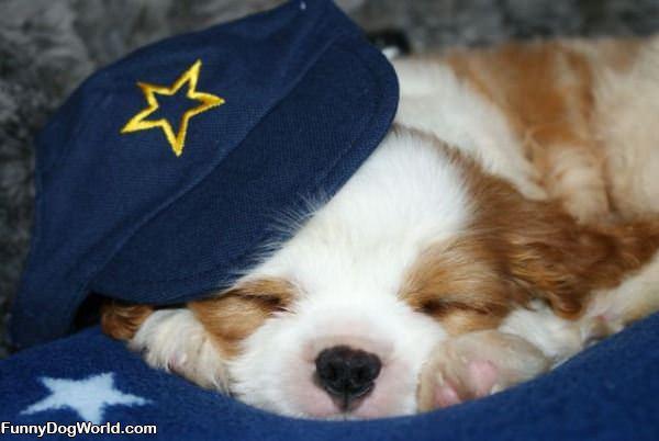 Cute Sleeping Pup