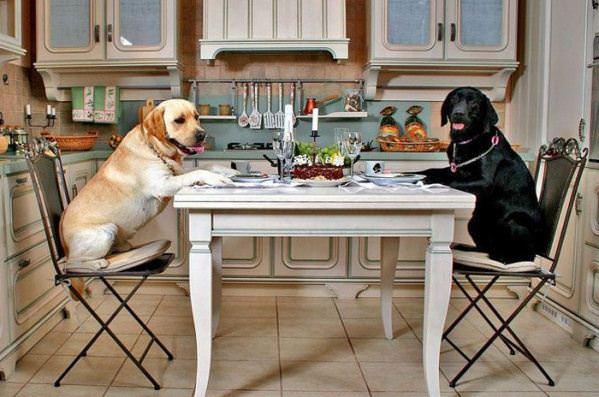 Dog Dinner