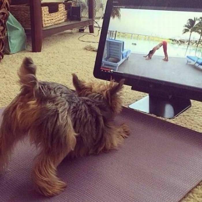 Dog Doing Yoga