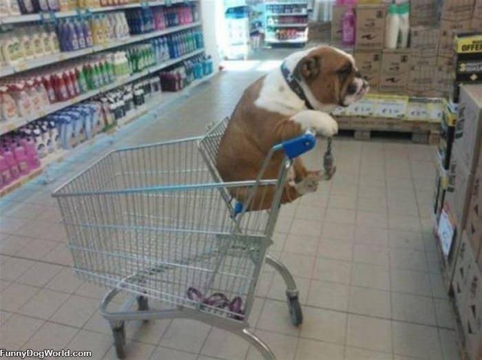 Dog In A Cart