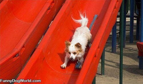 Dog On The Slide
