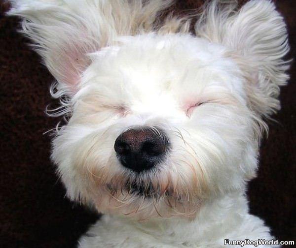 Doggy Nap