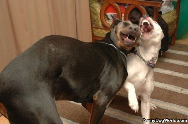 Dogs Laughing Together