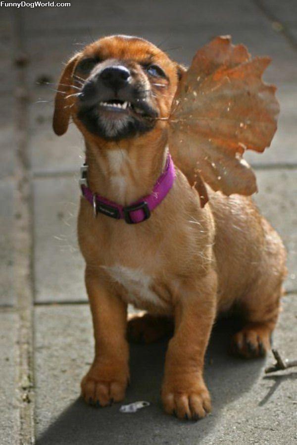 Fetched You A Leaf